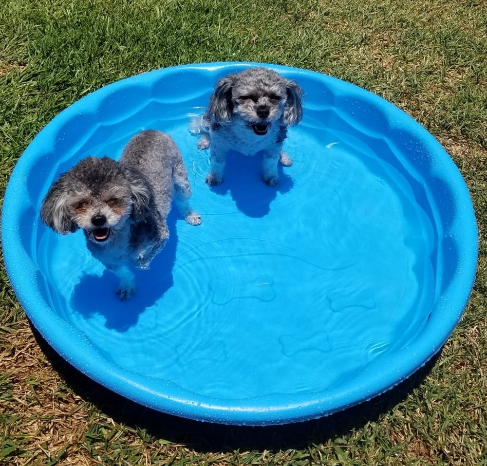 Swim in the puppy pool  - Trish Matarazzo