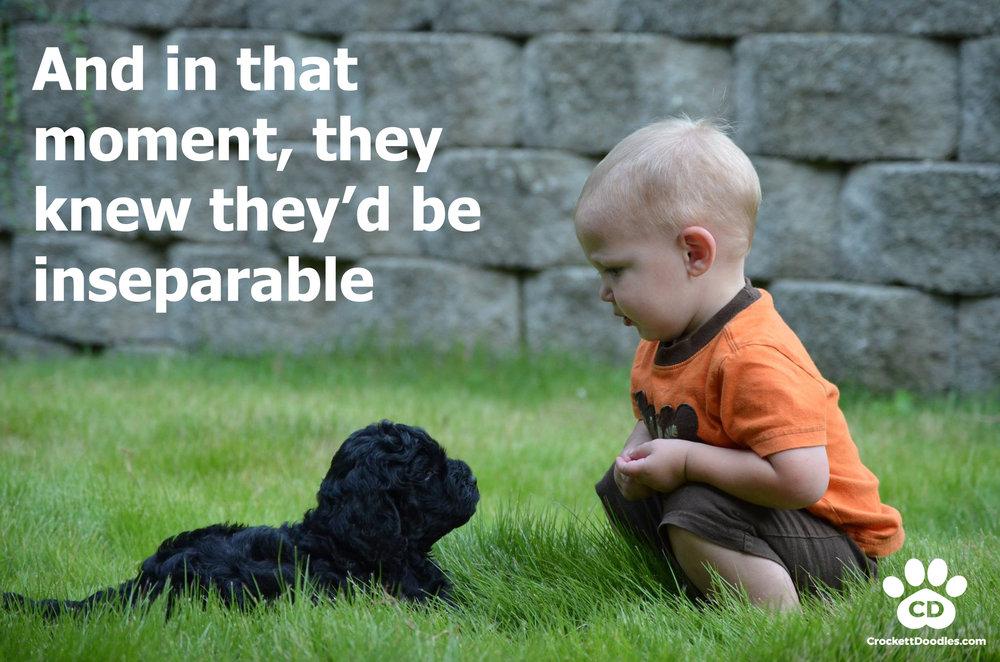 Inseparable-Labradoodle.jpg
