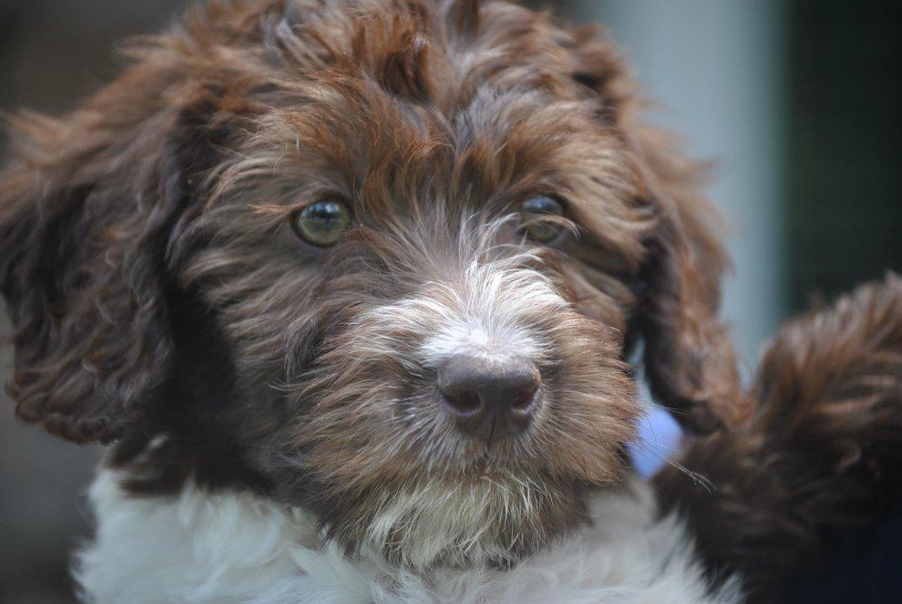 cute-new-puppy