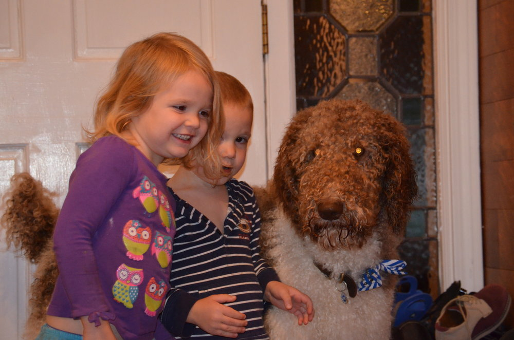 Oreo, the standard Poodle dad