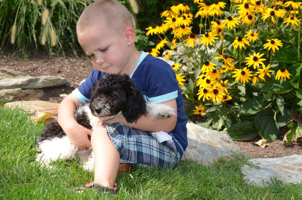 Benji, the mini Poodle dad