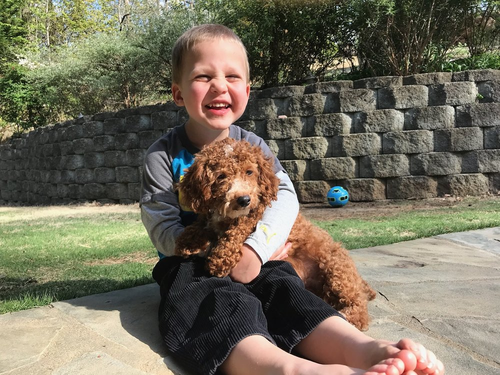Rudy, the mini Poodle dad
