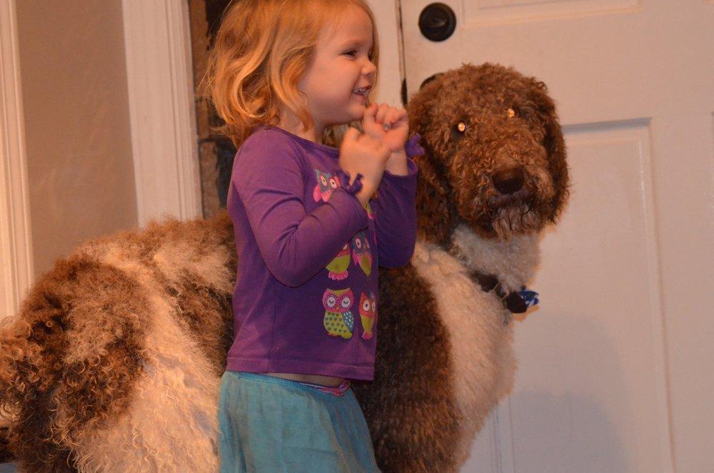 Oreo, 64 pound Poodle Dad