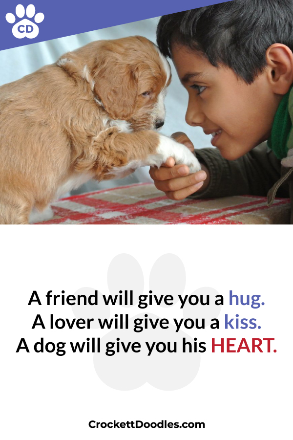 dog-will-give-you-his-heart.jpg