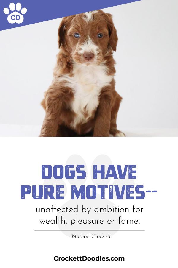 dogs-motives.jpg