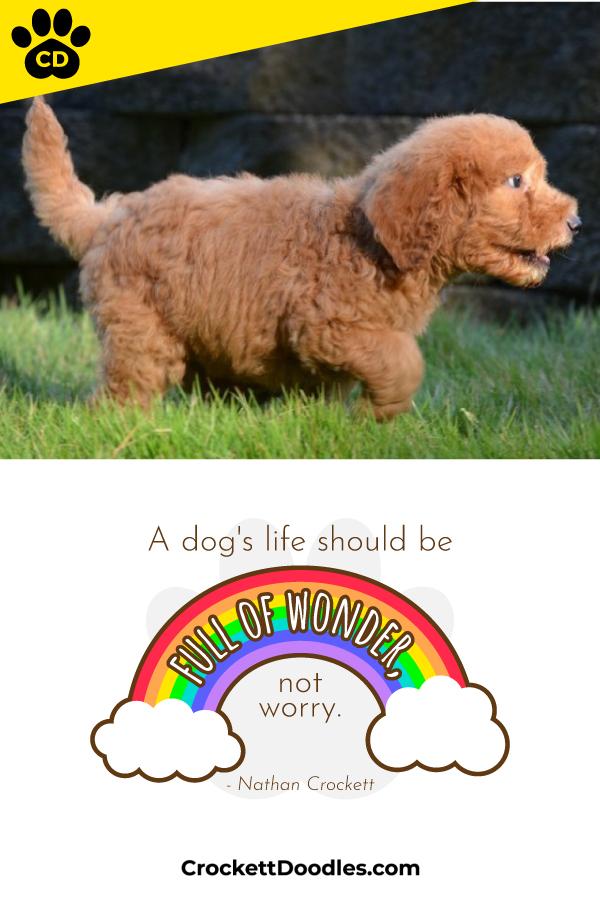 wonderful-puppy.jpg