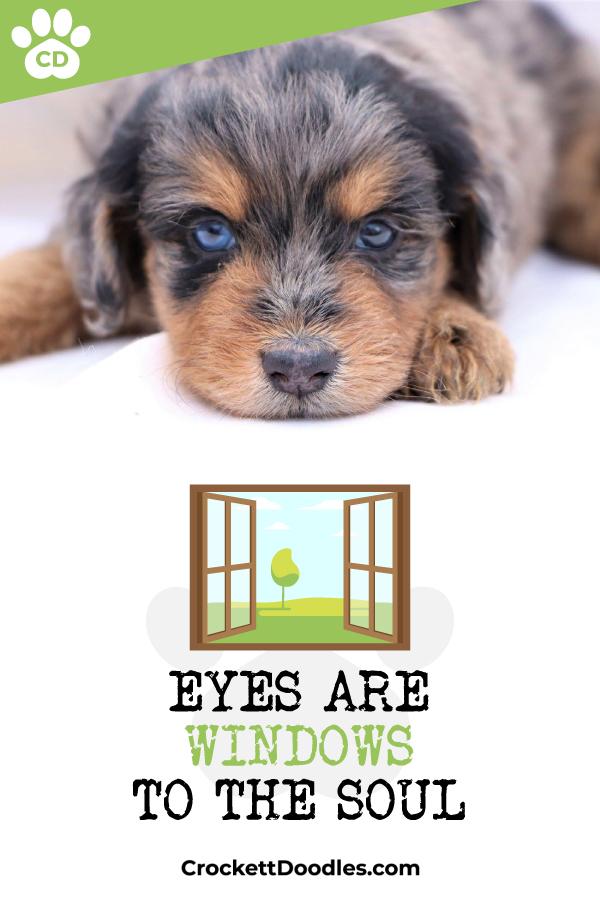 358424_EyesAreWindowsToTheSoul_1_020419.jpg