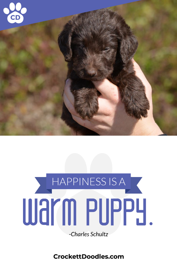 354317_HappinessIsAWarmPuppy_1_012819.jpg