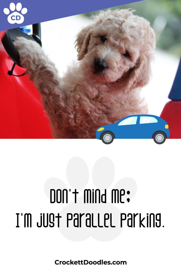 354304_ParallelParking_1_012419.jpg