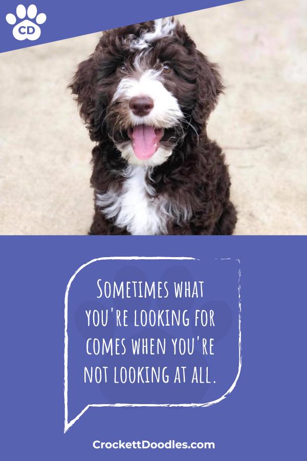 dog-quotes-crockett-doodles.jpg