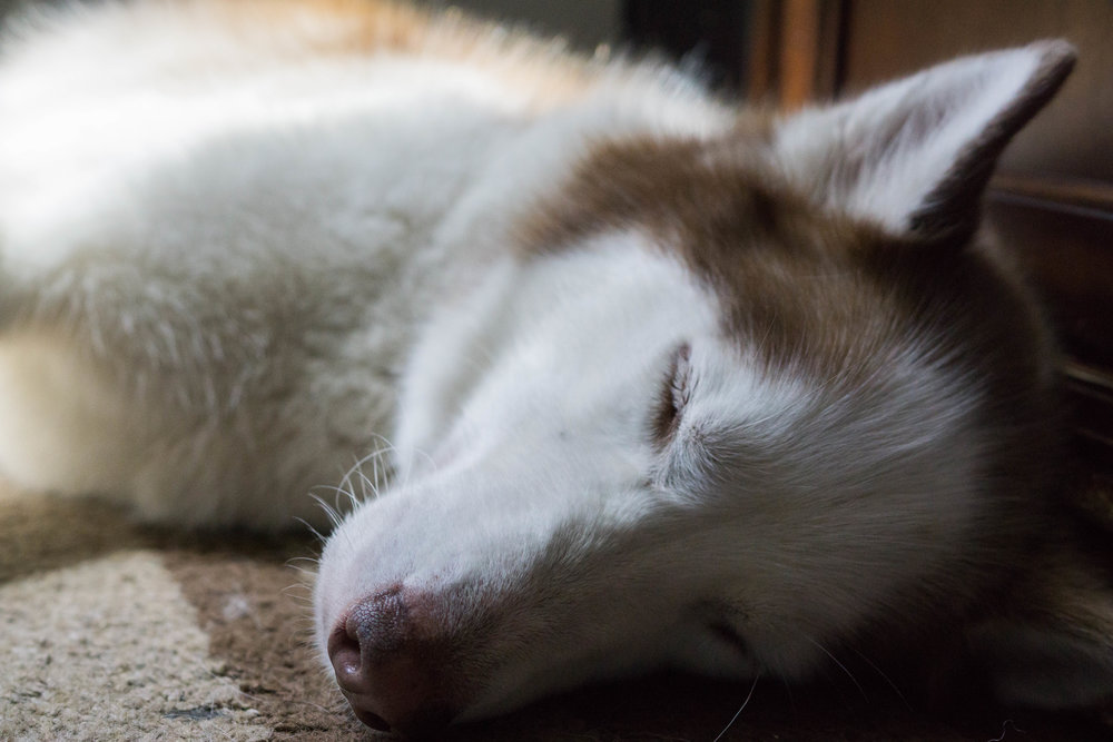 koda-sleep-1.jpg