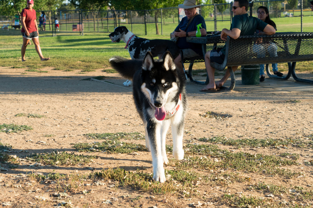 dog-park-jul-4-weekend-14.jpg