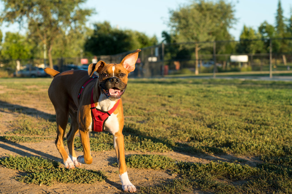 dog-park-jul-4-weekend-28.jpg