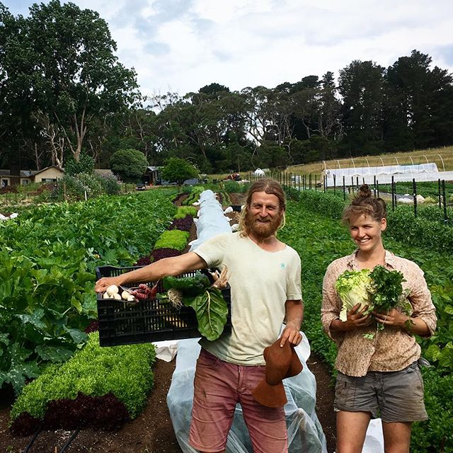 Wwoofing - Wwoofing is a a great way to explore Australia and learn a little along the way. Wwoofers offer a few hours of work a day in exchange for accomodation and sometimes meals. Stays can be for days, weeks or months and there generally is not structured training involved.