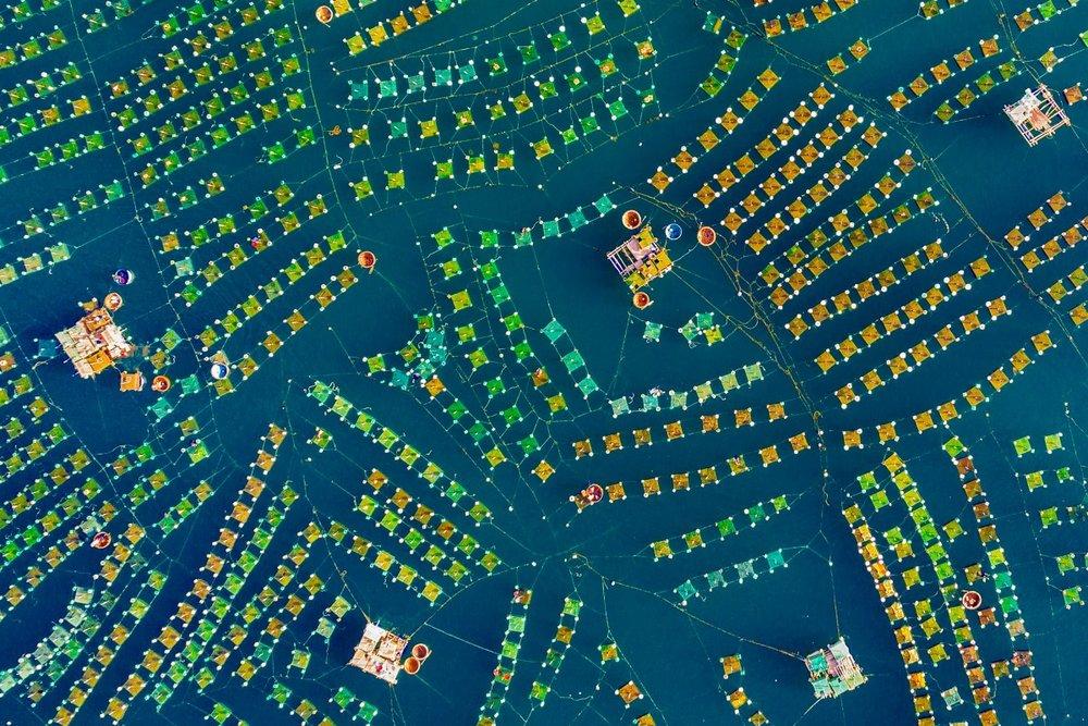 """Lobsters farm"" by    Trung Pham"