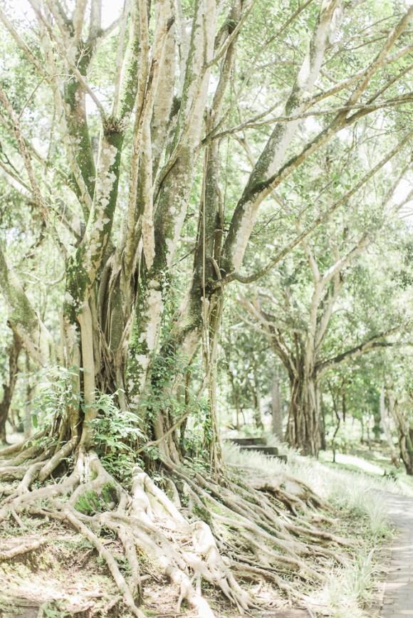 huge forest bali