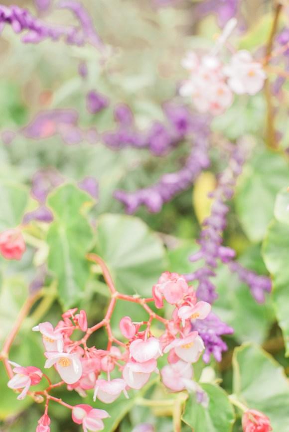 flowers in bali