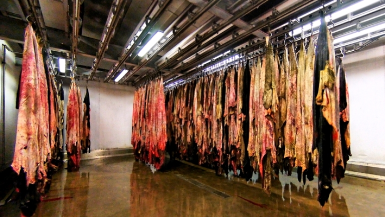 Animal skins are left to dry in a tannery