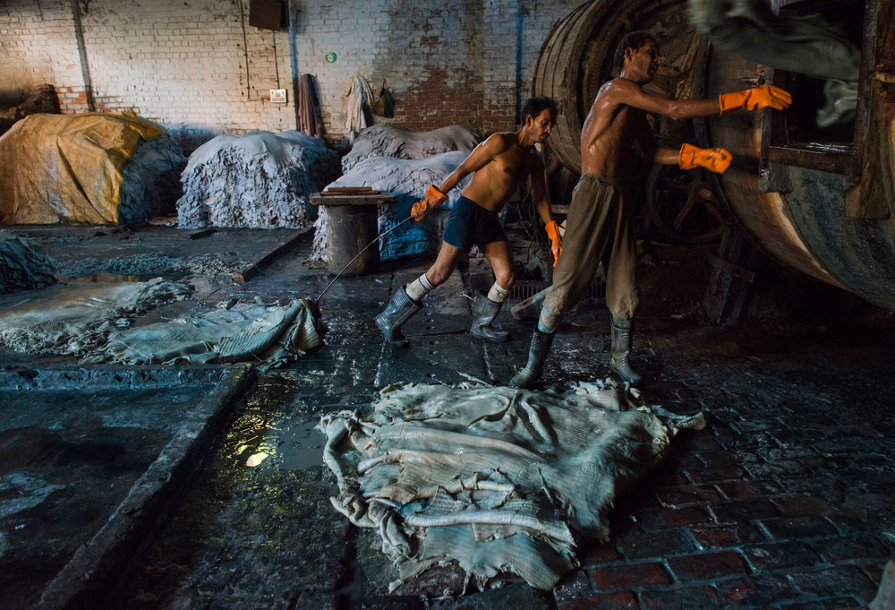 Leather tanning workers handling Chromium-tanned pelts