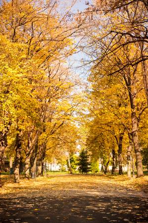 84794641-park-walking-area-covered-in-fallen-leaves-autumn-scene.jpg