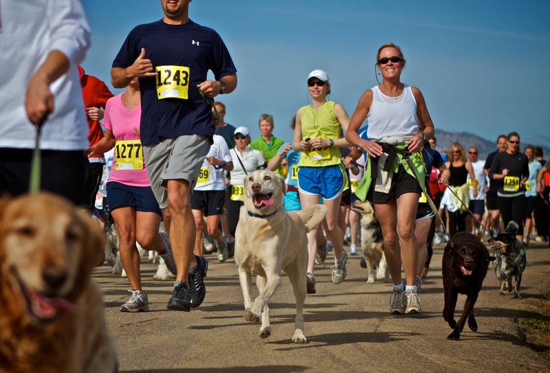 Dogs-and-people-running.jpg