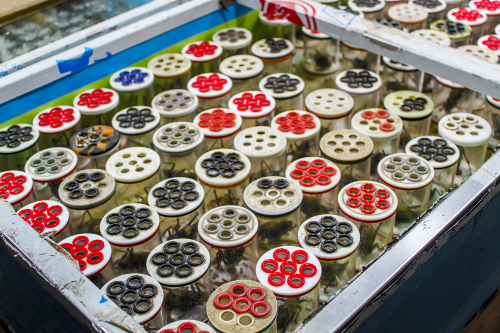 tailor-made-shanghai-sightseeing-tour-insect-and-plant-market