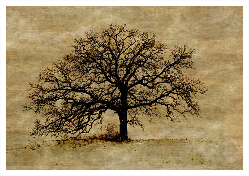 Bare Tree limited edition prints
