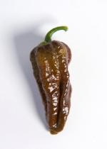 Chocolate Habalokia