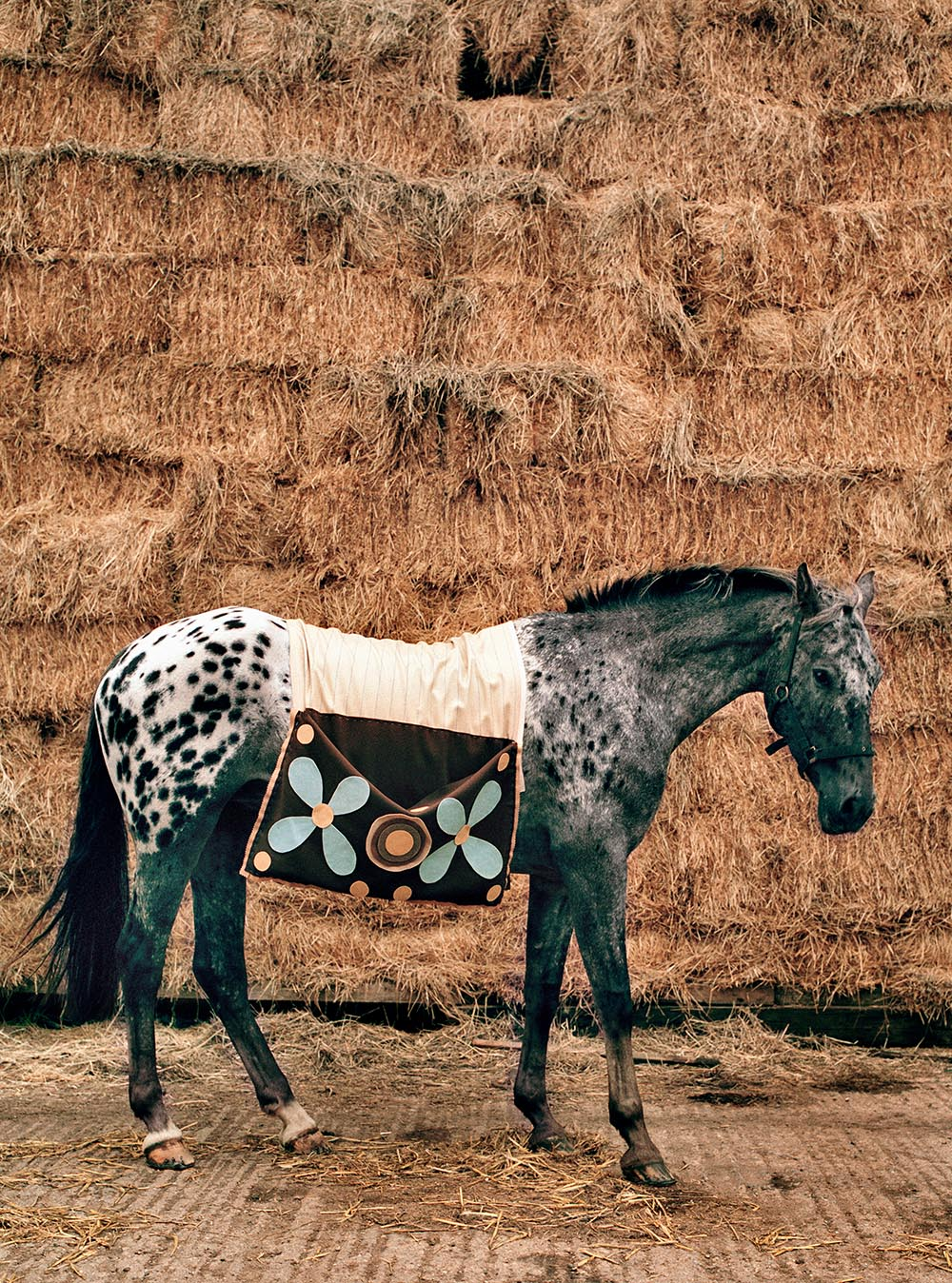 horse and haystack•world of interiors