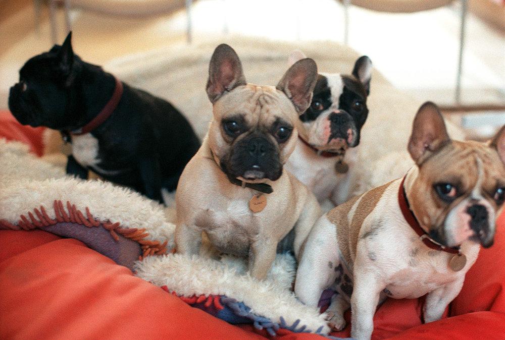 ben de lisi's dogs