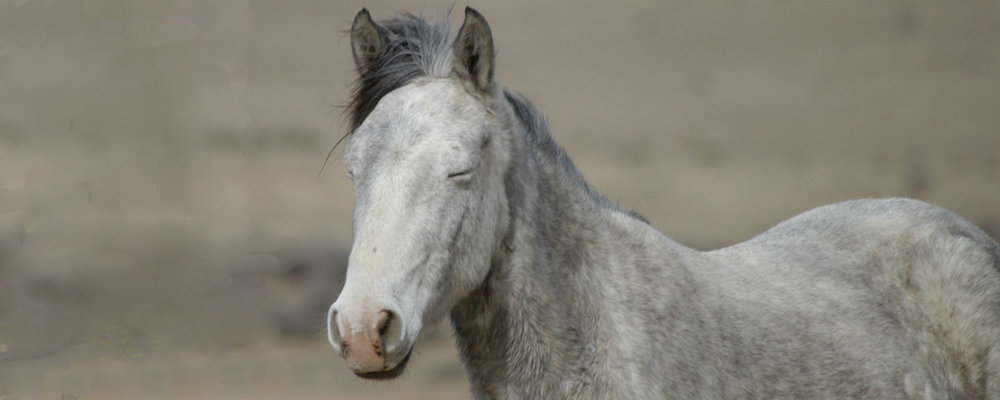 brigidparsons-header-horse.jpg
