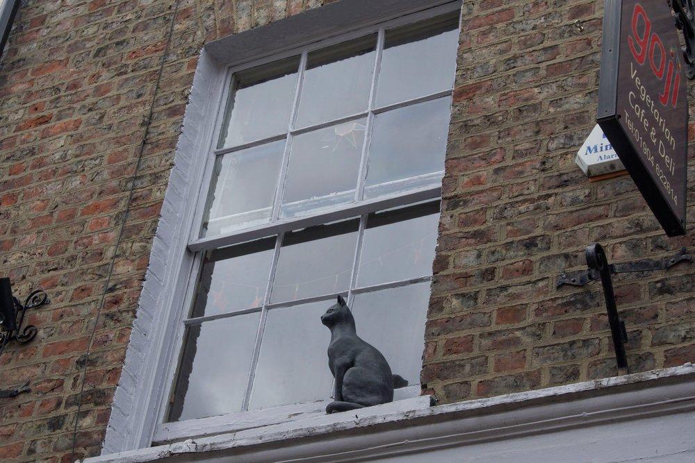 Cat 7 - Bob