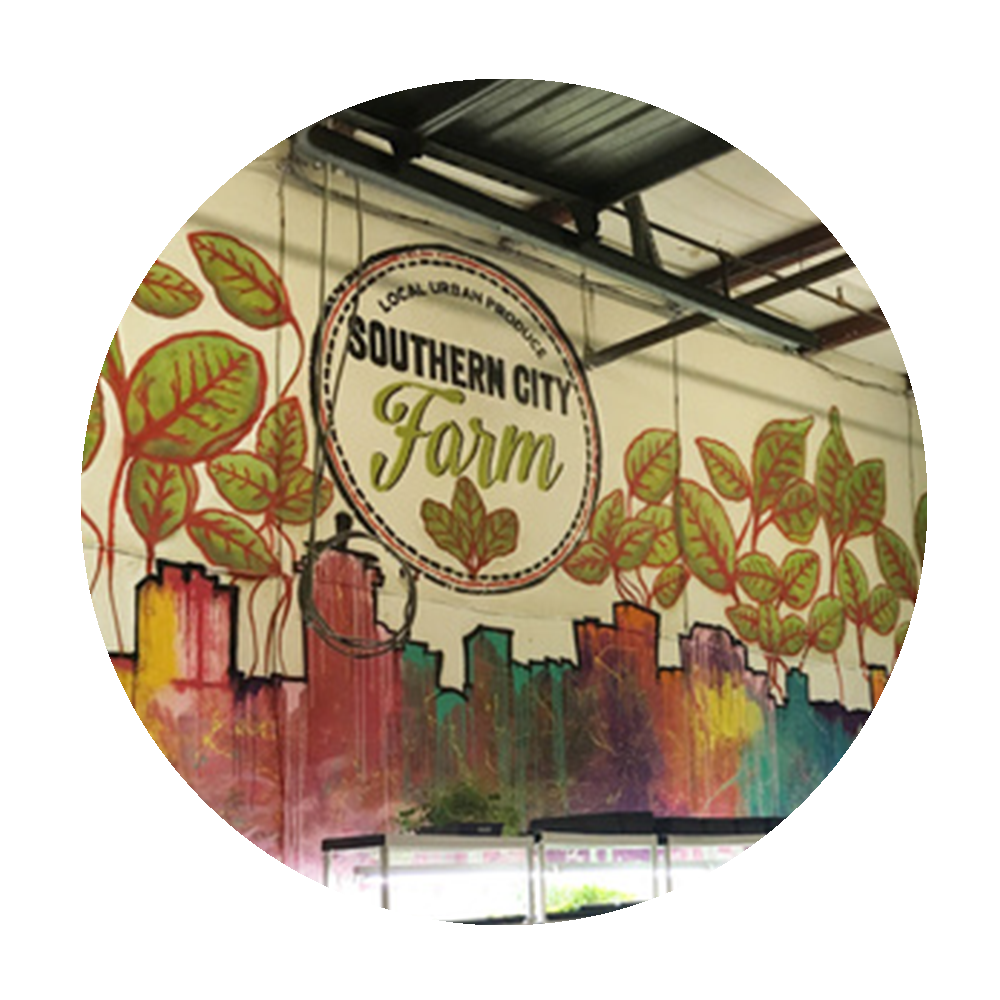MORE ABOUT US... - Andrew Prat and Adrian Nikdast are the founders of Southern City Farm, which is bringing local, sustainably grown produce to chefs and markets throughout the city of New Orleans. In a climate controlled, urban farm facility we grow over 40 varieties of microgreens, herbs, sprouts, and edible flowers. Our growing facility is so close to the partner establishments that we are able to deliver fresher produce that is also more flavorful compared to traditionally grown greens.Southern City Farm is dedicated to providing produce harvested within 24-48 hours of reaching your customer's table.