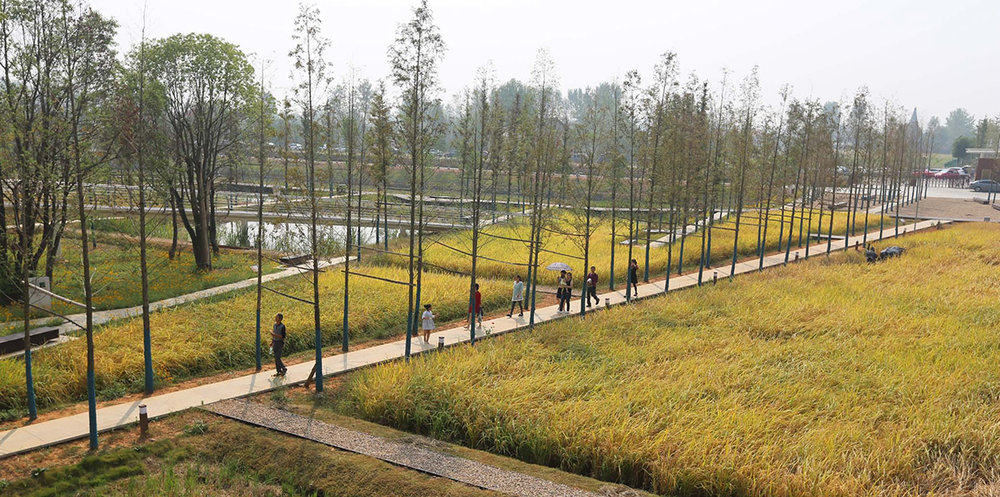 The Chengtoushan Archeological Park - winner of the Landscape of the Year 2017 at the World Architecture Festival in Berlin.
