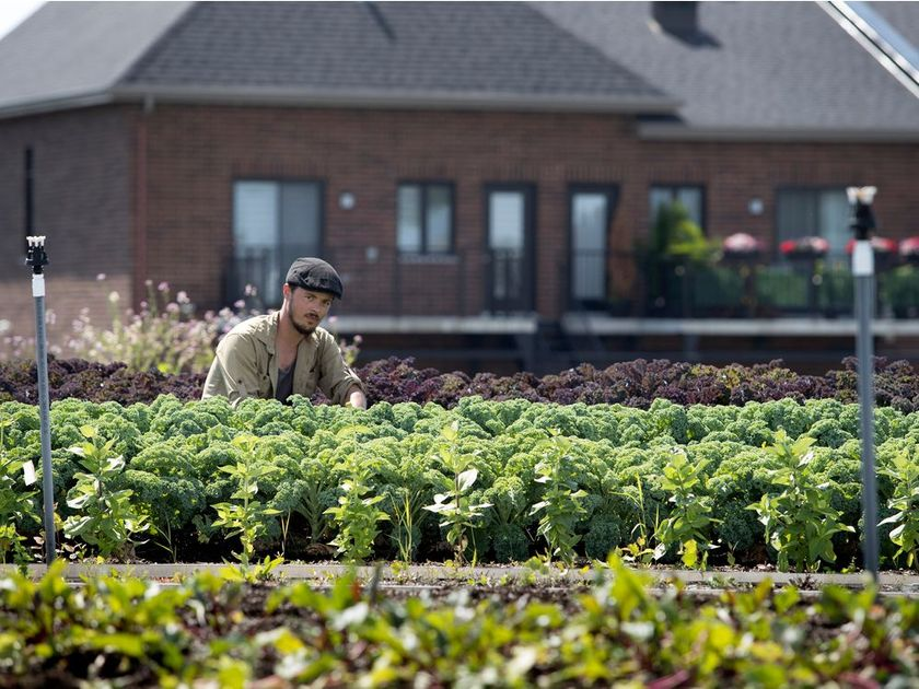 Richard Duchemin in the rooftop produce garden on top of his IGA store