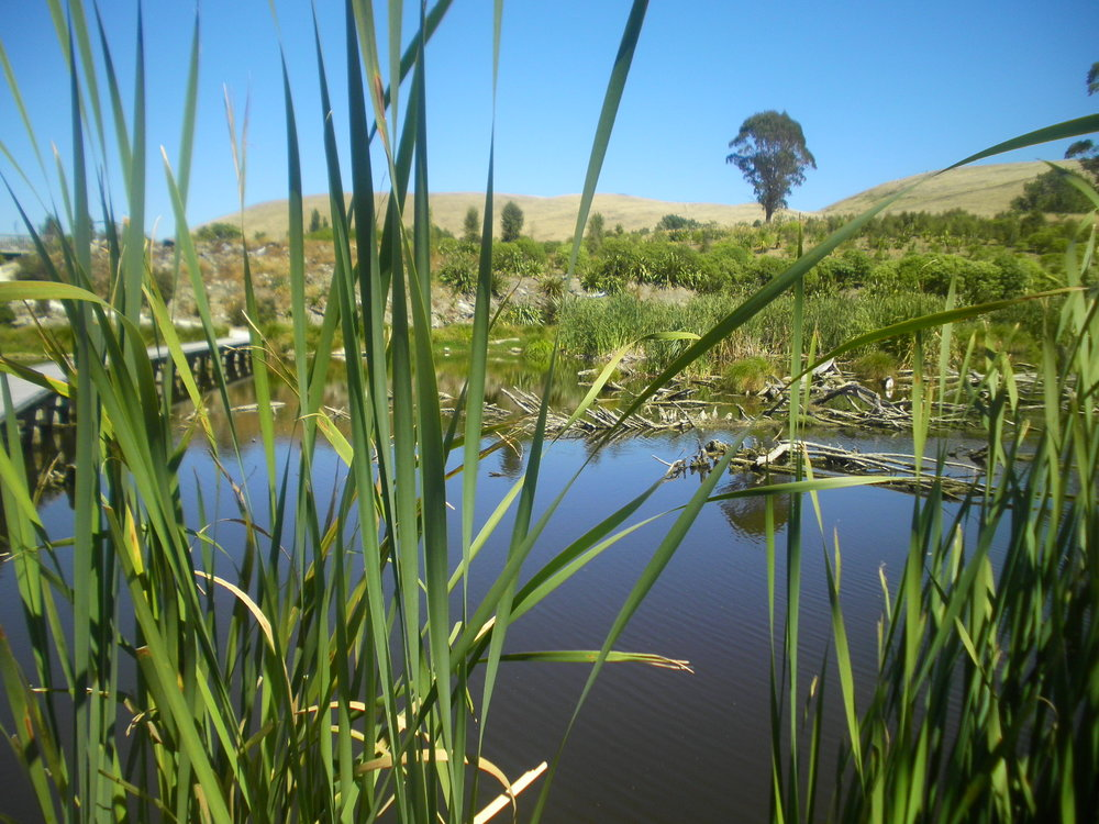 Pekapeka swamp south of Hastings. Photo credit Rachel Hyde - www.ramsar.org