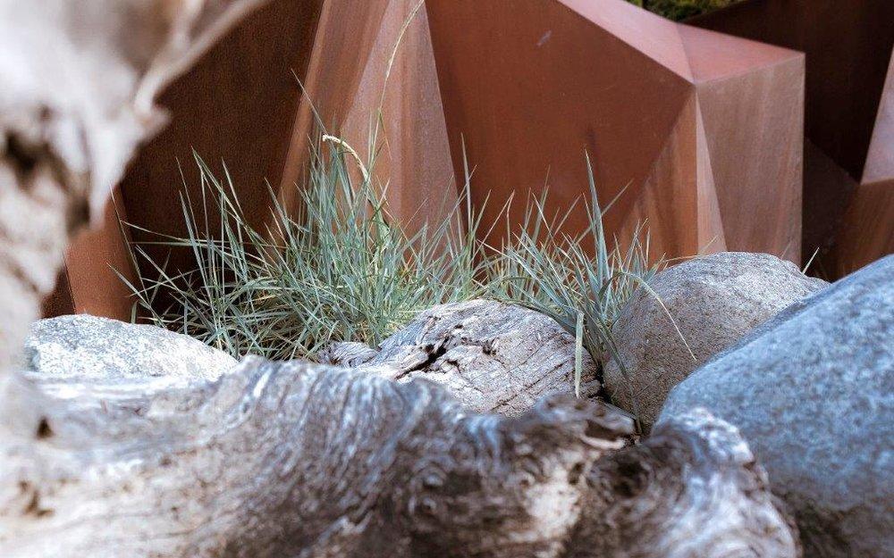 Dune grass is beginning to establish itself along the wall. Photo credit Brett Hitchins.