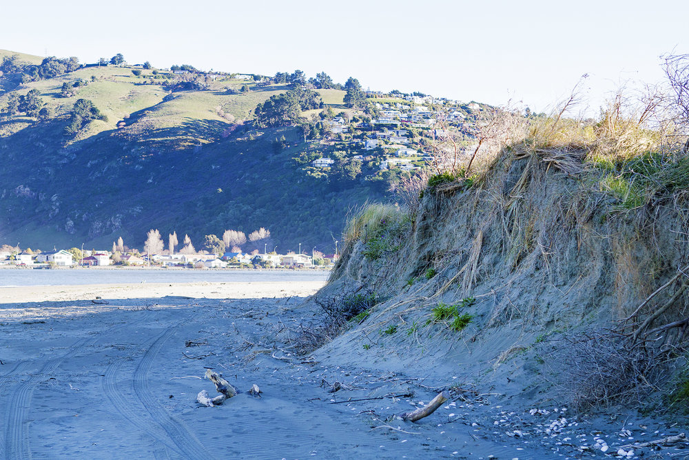 The dunes need careful consideration in future planning. Photo credit: Simon Makker, Regenerate Christchurch.