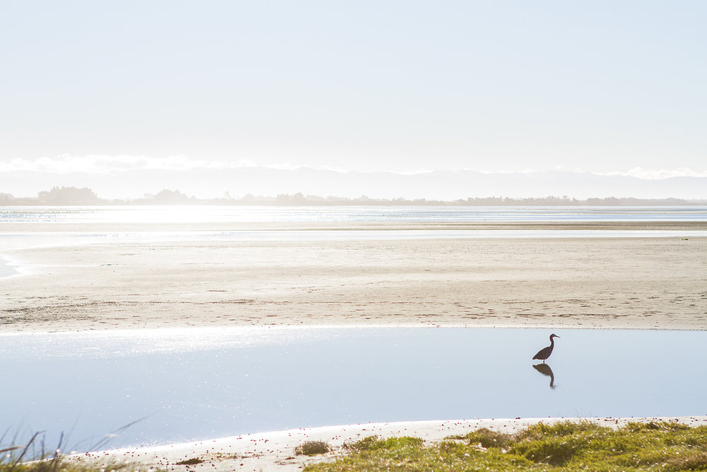 A heron at Southshore. Photo credit: Simon Makker, Regenerate Christchurch.