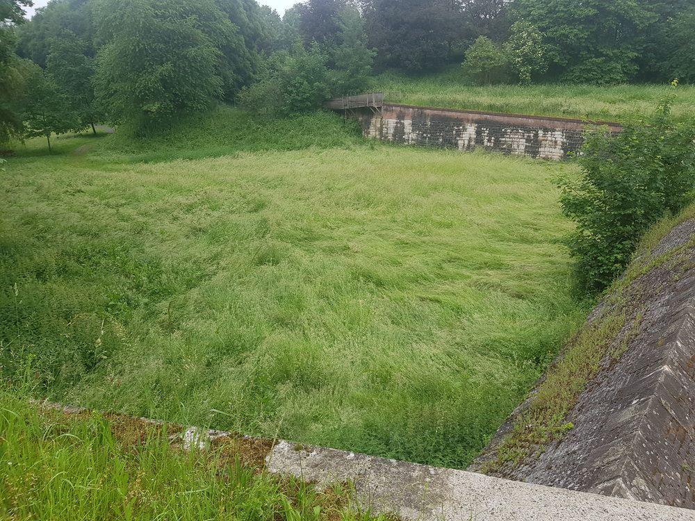Before - the overgrown meadow which has been transformed into the peace garden.