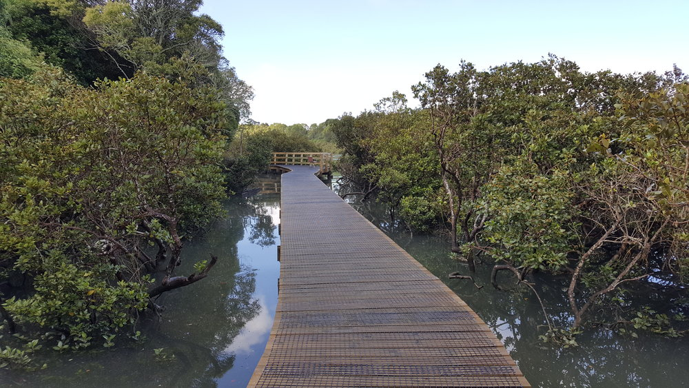 The Weona-Westmere coastal walkway in Auckland.
