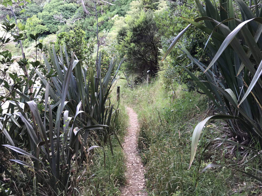 A bush path near Ngunguru in Northland.