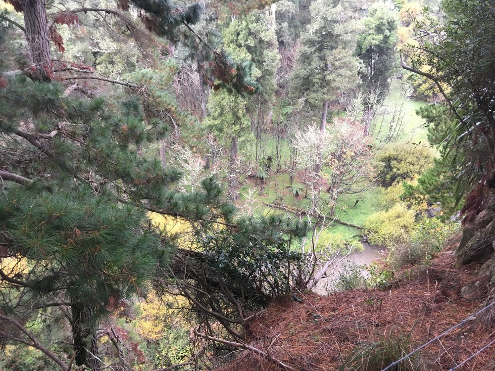 Taihape has  500-600 year old Kahikatea trees just a few hundred metres from the town centre.