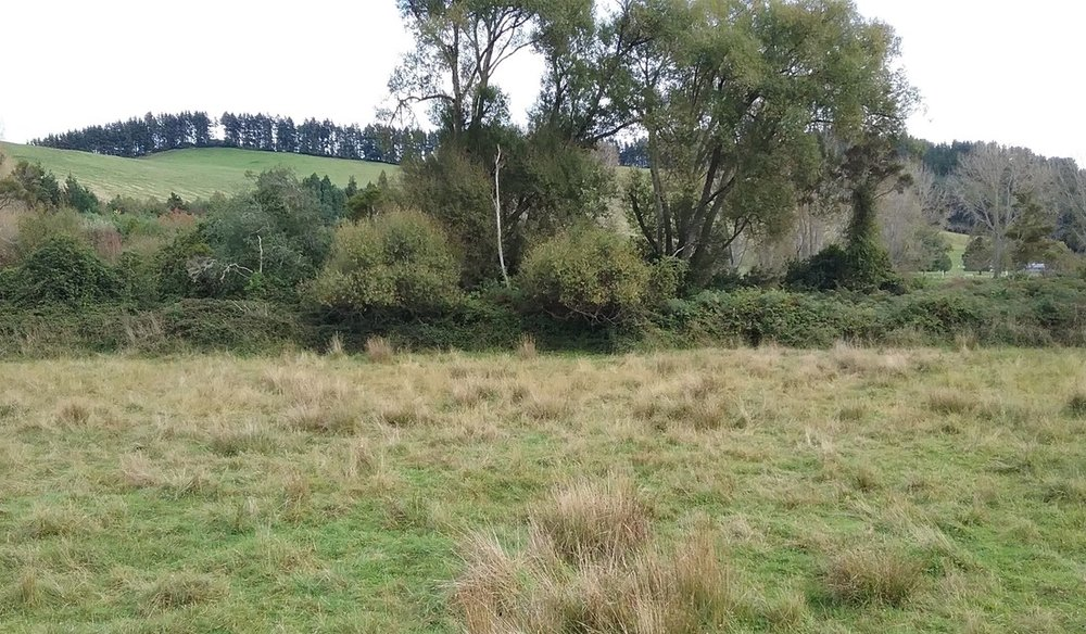 The river corridor beyond the grazed pasture has opportunities for restoration, rongoā planting, and eco-tourism.