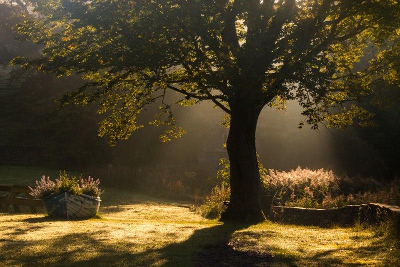 TREE IN SUNLIGHT UK .jpeg