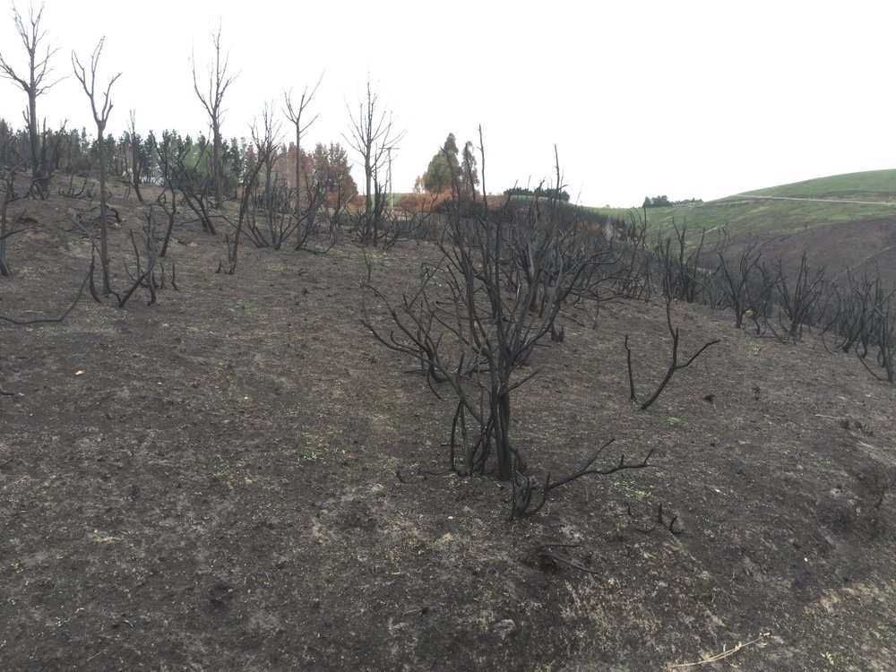 The after effects of the 2017 Port Hills fire.