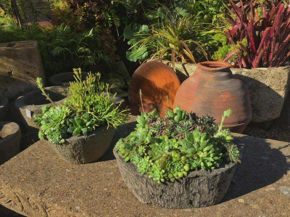 succulents+in+stone+vessel.jpg