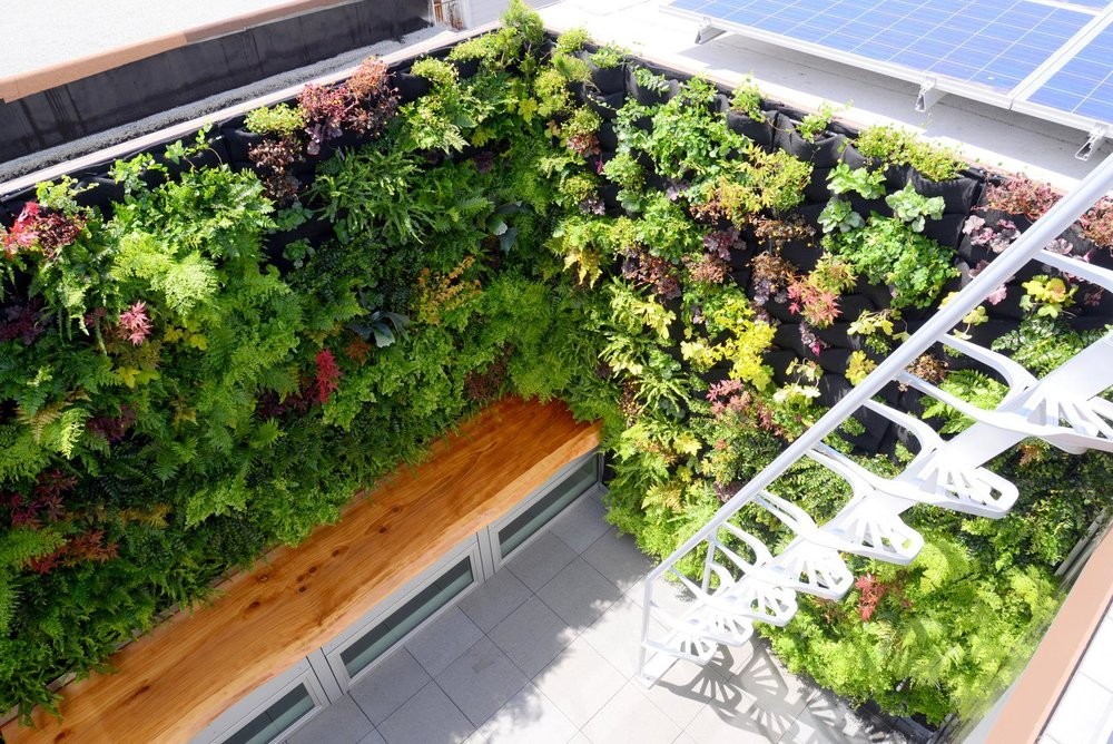 vertical garden looking down.jpg