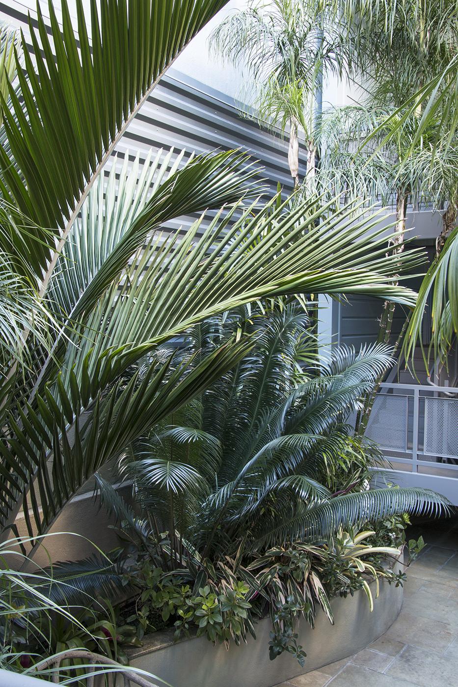 Debra's Vertical Garden_6005.jpg