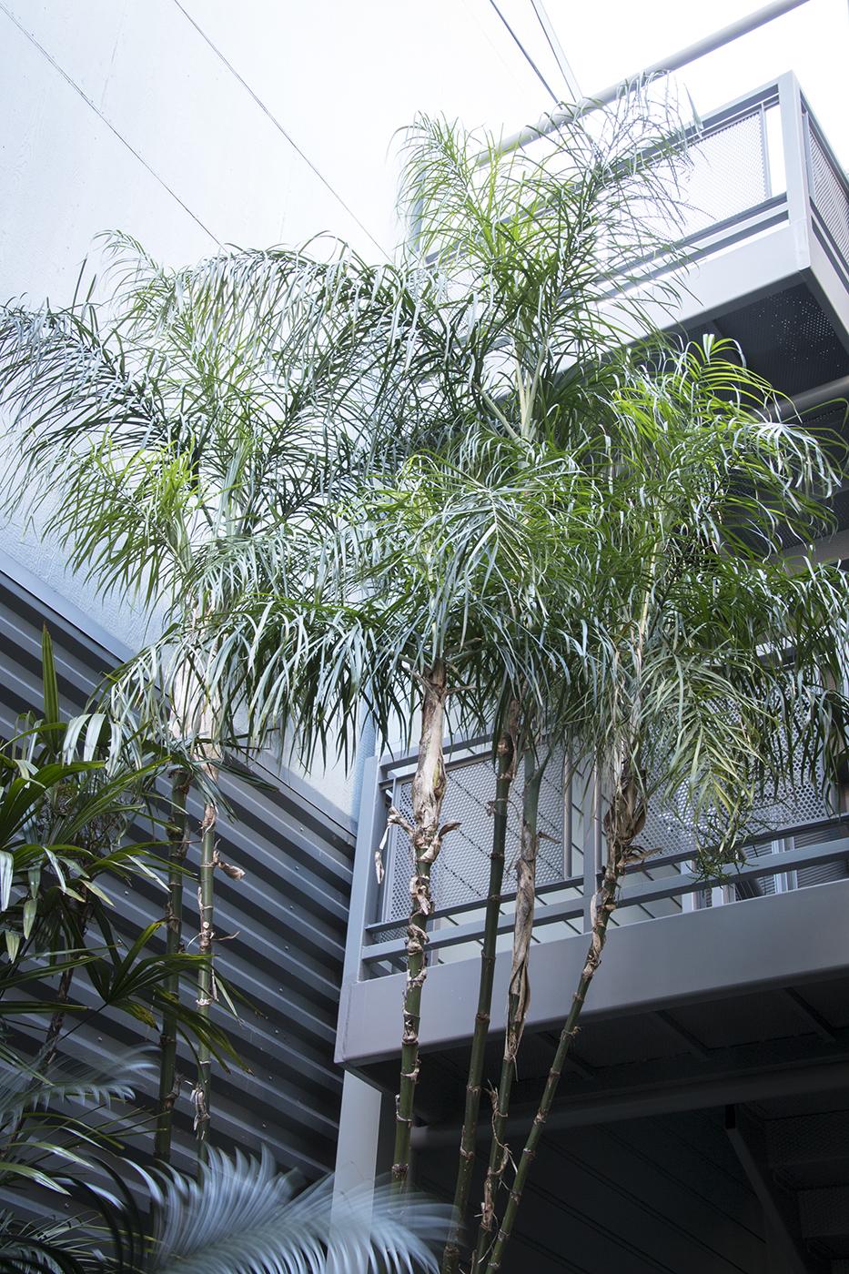 Debra's Vertical Garden_6025.jpg